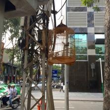 _cage_oiseau